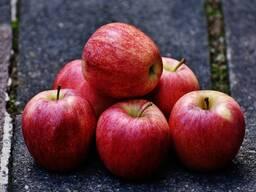 Куплю яблоки оптом на промпереработку (опад)