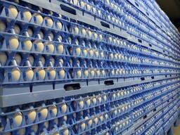 Куплю яйцо инкубационное
