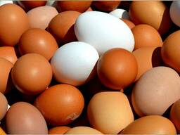 Куриное яйцо с дисконтом от производителя.