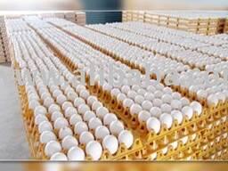 Куриные яйца бровь и белый