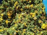Лекарственные травы - фото 5