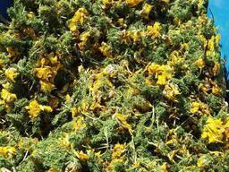 Лекарственные травы - photo 5