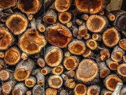 Лес кругляк