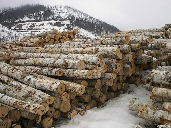Лес кругляк граб, дуб, ольха, береза, ясень, клен, вяз,