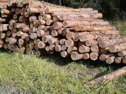 Лес кругляк от 14 см.