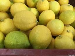 Лимон - фото 2