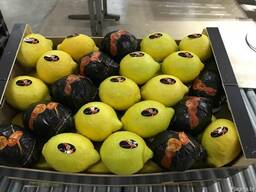 Лимоны. Прямые поставки из Испании .
