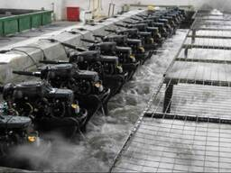 Лодочный мотор Parsun TC3.6BMS - фото 6