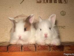 Мини-кролики Беларусь