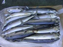 Рыба (минтай, сельдь, скумбрия, килька, мойва, салака, путассу, хек, аргентина и др. )