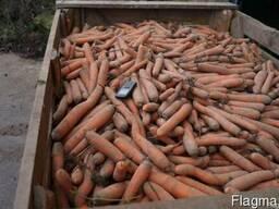 Морковь РБ