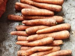 Морковь стандарт