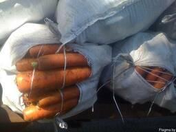 Морковь столовая - фото 2