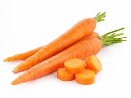 Морковь столовая ранняя