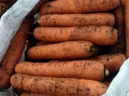 Морковь урожай 2021г.