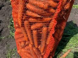 Продажа. Морковь урожай 2021г. Сетевое качество, опт от 20 тонн.