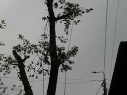 Обрезка деревьев в Гомеле
