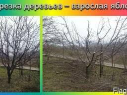 Обрезка деревьев. Мероприятие по востановлению