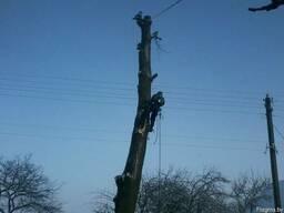 Обрезка деревьев(омолаживающая, формовочная, санитарная) - фото 3