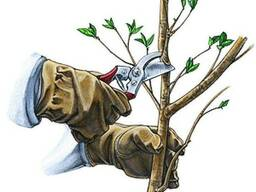 Обрезка деревьев, винограда, кустов