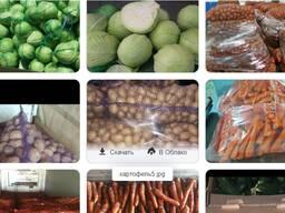 ООО БЕЛ-ДОЗЕР продает овощи и фрукты оптом