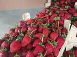 Оптовая продажа фруктов и овощей из Турции от производителя - фото 1