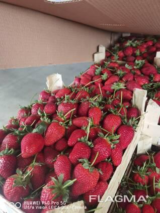 Оптовая продажа фруктов и овощей из Турции от производителя