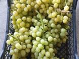 Оптовая продажа фруктов и овощей из Турции от производителя - фото 8