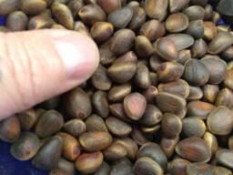 Орех кедровый