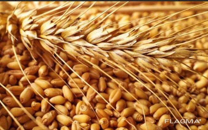 Овес, ячмень, пшеница, просо