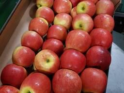 Овощи, фрукты, ягоды оптом