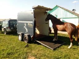 Перевезти лошадь перевезти корову Превозка лошадей перевозка коров перевозка животных