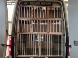 Перевозка домашних животных (собаки, коты)