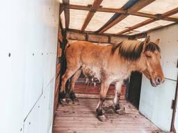 Перевозка животных (коней, быков, лошадей, свиней и т. д)