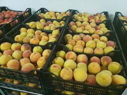 Персик сорт Фаэт