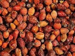 Плоды шиповника сушенные