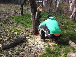 Подрезка,Распиловка дров,дерева,кустов