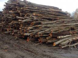 Покупаем дрова всех пород