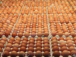 Постоянно покупаем яйцо со скидкой оптом
