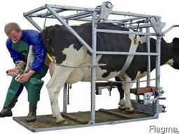 Предоставляем услуги по лечебно-профилактической обрезке копыт у крупного рогатого скота.