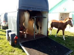 Перевозка лошадей.