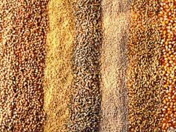 Зерно - 2021