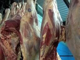 Продам говядину замороженную(бык, корова)