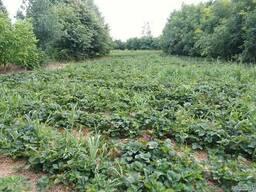 Продам хутор для агробизнеса.