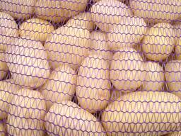 Продам картофель МЫТЫЙ продовольственный из Беларуси