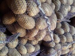 Продам картофель продовольственный из Беларуси