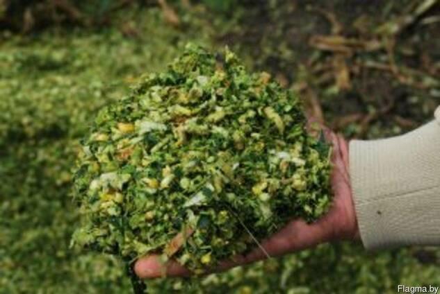 Продам кукурузу,овес, тритикале, силос, сенаж