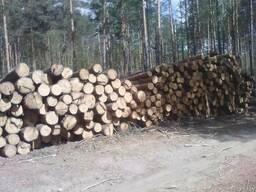 Продам Лес круглый - фото 2