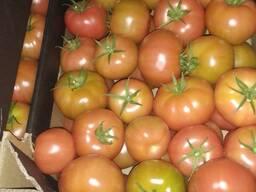 Продам оптом томат, огурец