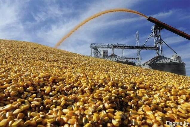 Продам овес, ячмень, пшеницу, тритикале, кукурузу!